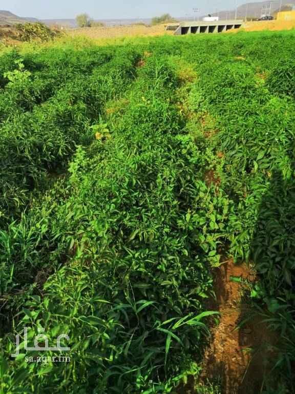 مزرعة للبيع في عسفان