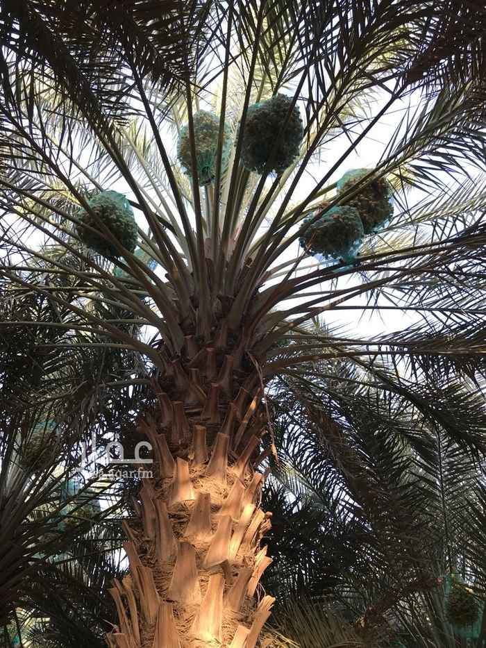 مزرعة للبيع في طريق الملك عبدالعزيز ، شقراء