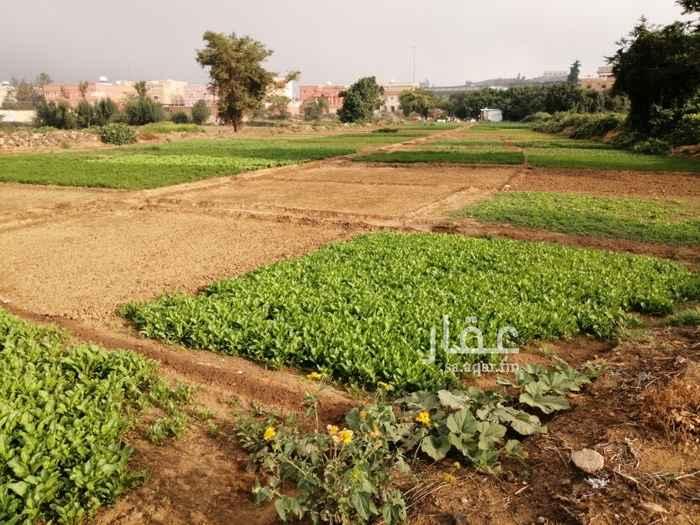 مزرعة للبيع في حي الربوة ، أبها