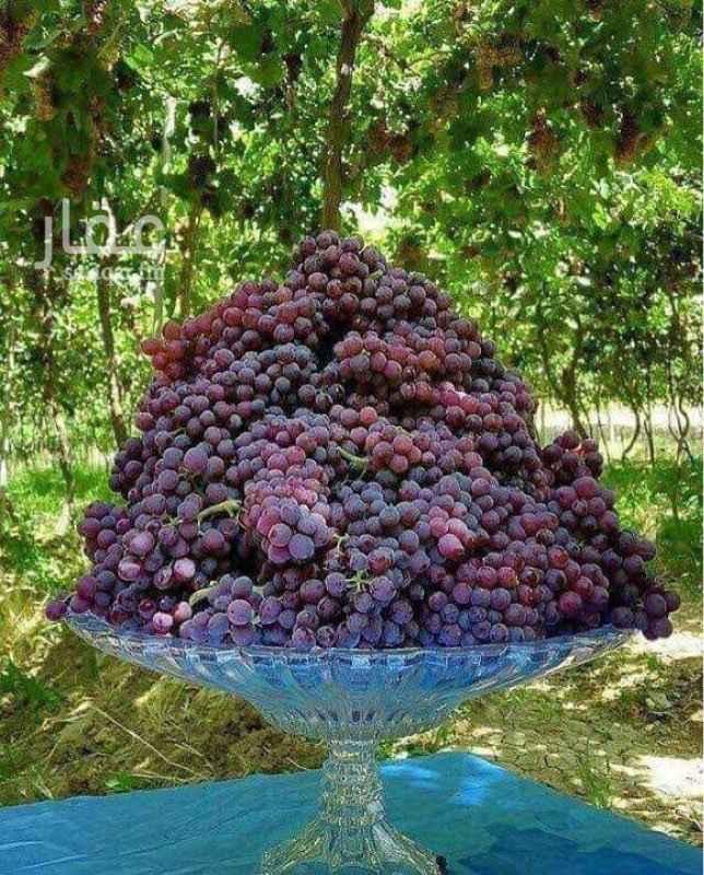 مزرعة للبيع في الهياثم