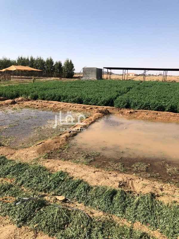 مزرعة للبيع في حي ج14 ، الطائف ، الطائف