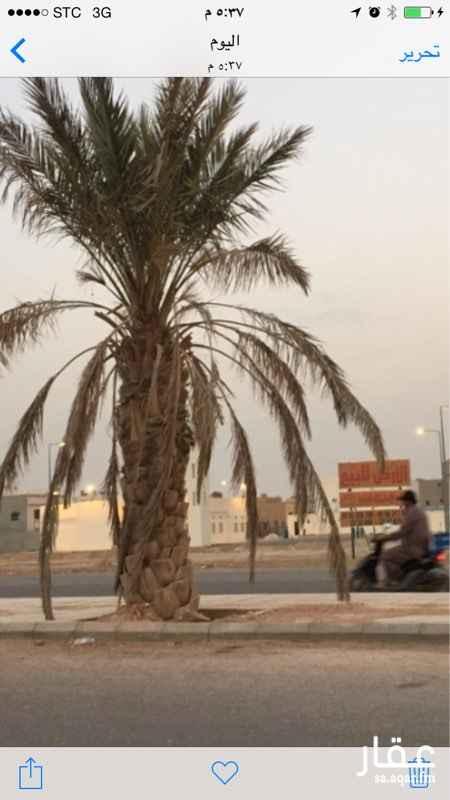 أرض للإيجار في العارض, الرياض
