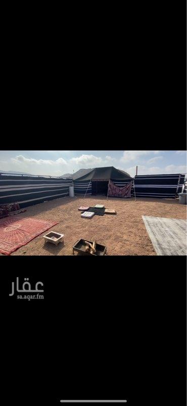 مخيم للإيجار في شارع سعيد بن الاجماع ، حي السلام ، المدينة المنورة ، المدينة المنورة