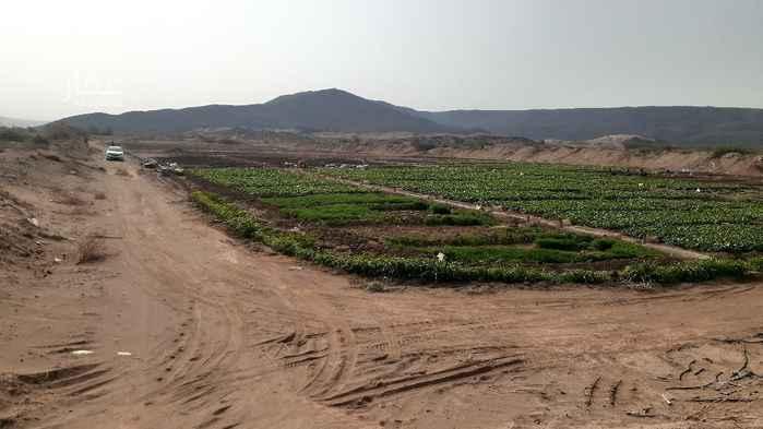 مزرعة للبيع في الجموم