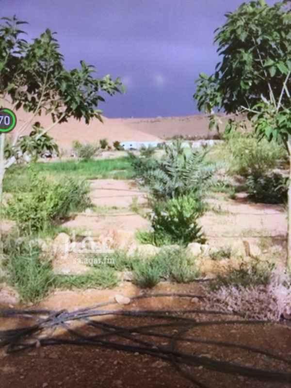 مزرعة للبيع في شارع سعيد بن الحارث السهمي ، حي عرقة ، الرياض