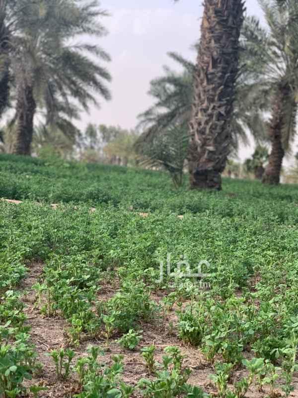مزرعة للبيع في الجعيمة