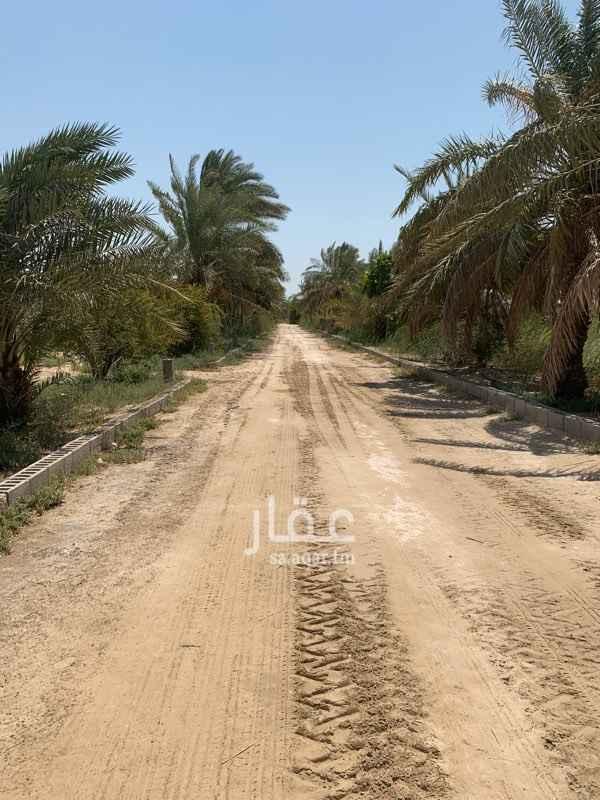 مزرعة للبيع في حي أبو معن ، صفوى ، القطيف
