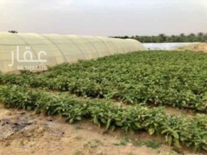 مزرعة للبيع في حي السلام ، عنيزة ، عنيزة