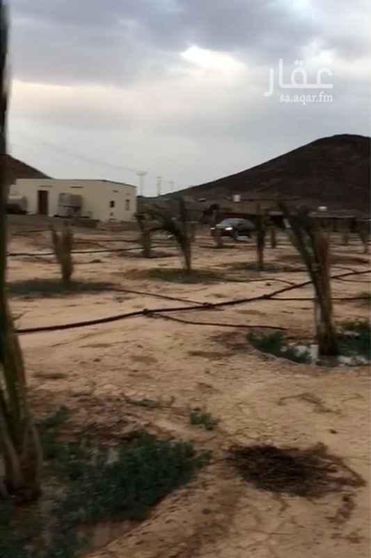 مزرعة للبيع في شارع احمد بن محمد بن بكر النسائي ، حي الغابة ، المدينة المنورة ، المدينة المنورة