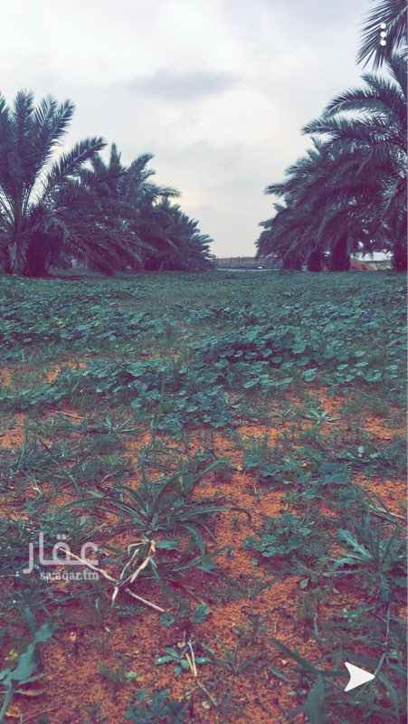 مزرعة للبيع في المجمعة